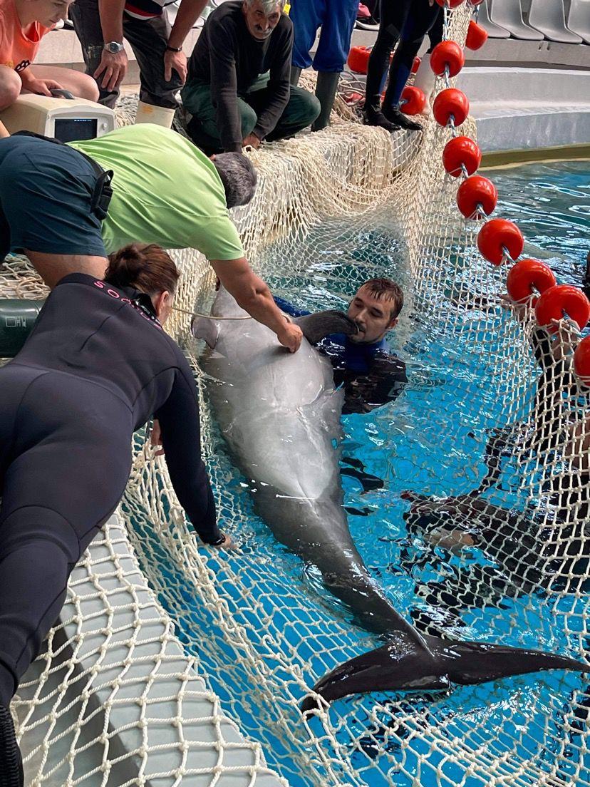 Delfinul Chen-Chen, de la Delfinariul din Constanța, s-a îmbolnăvit