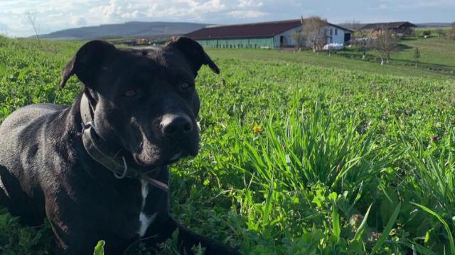Un câine a dispărut fără urmă de câteva zile. Se oferă o recompensă de 1.000 de euro