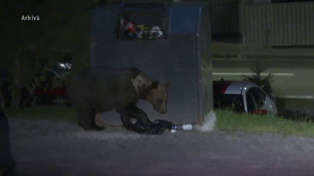 Un bărbat din Comarnic, în stare gravă. A fost atacat de un urs chiar în livada sa