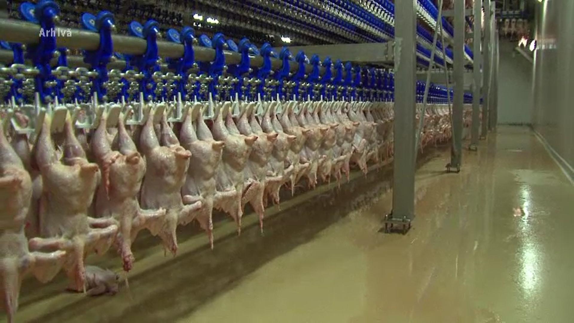Zeci de tone de carne de pasăre din import, depistate cu salmonella de reprezentanții Autorității Sanitar Veterinare